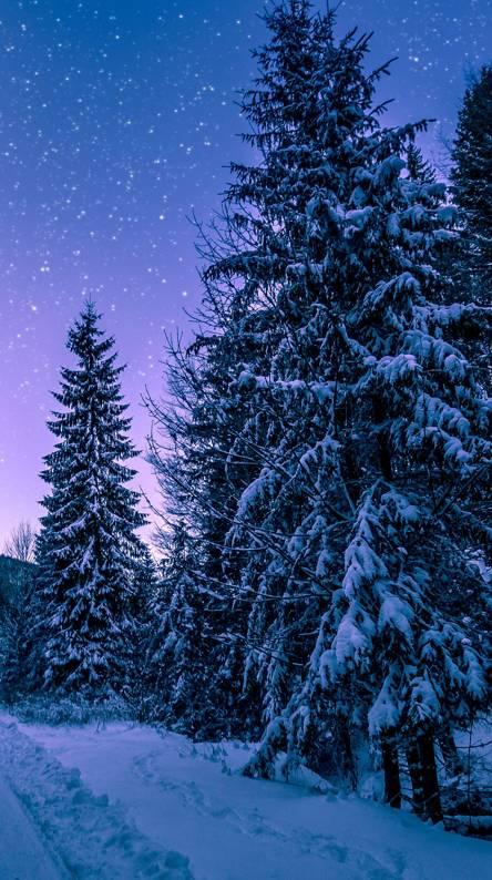 Snowy night trees