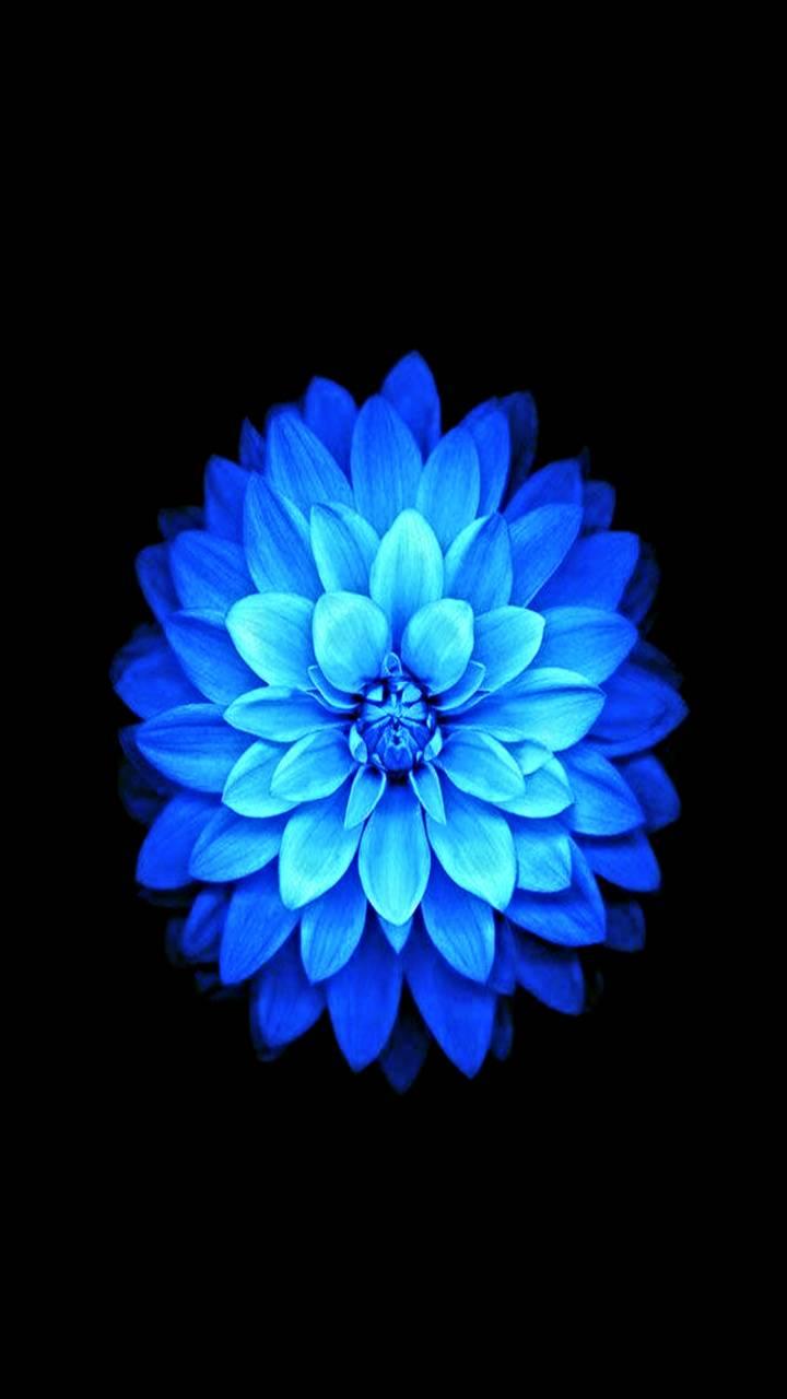 HD Blue Lotus Flower