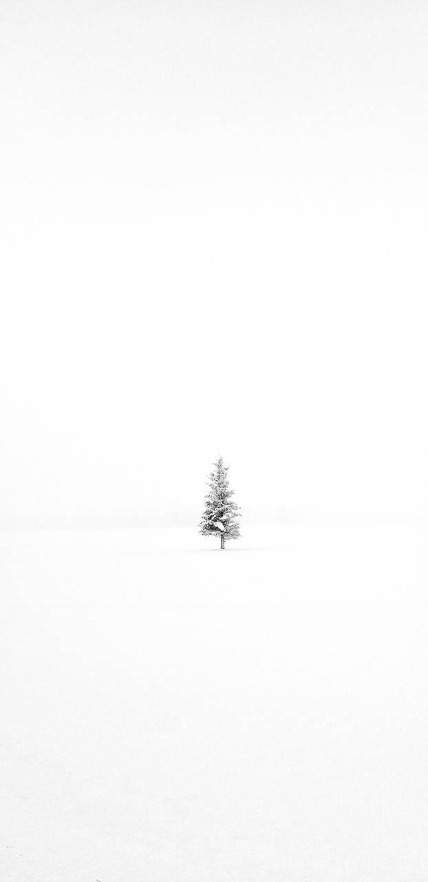 Minimalist Winter