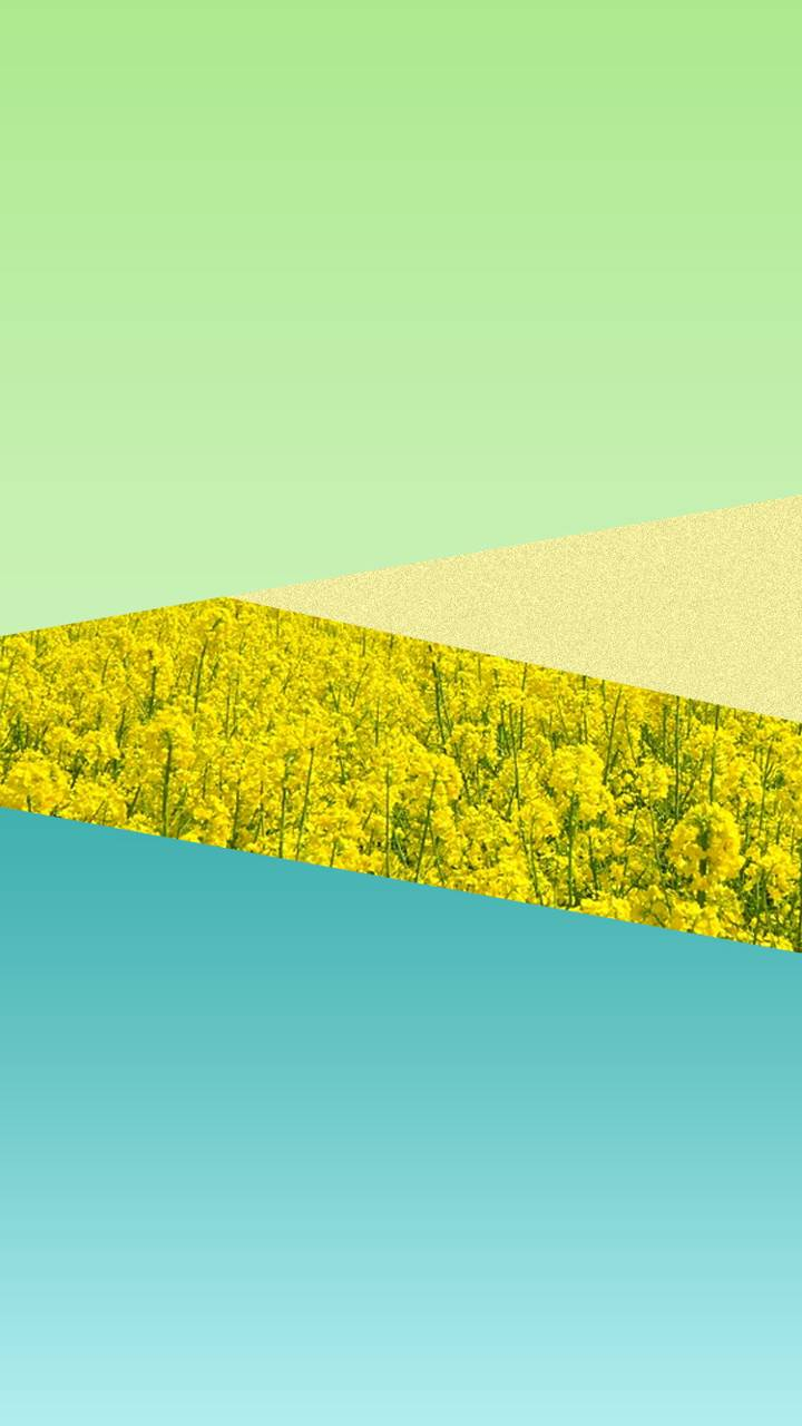 Yellow Field Abstrac