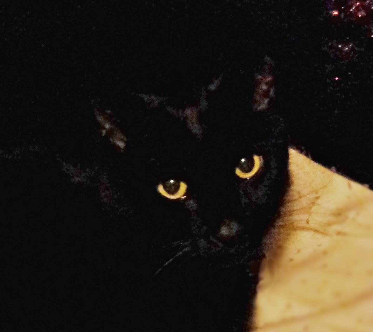 Black Cat Gold Eyes