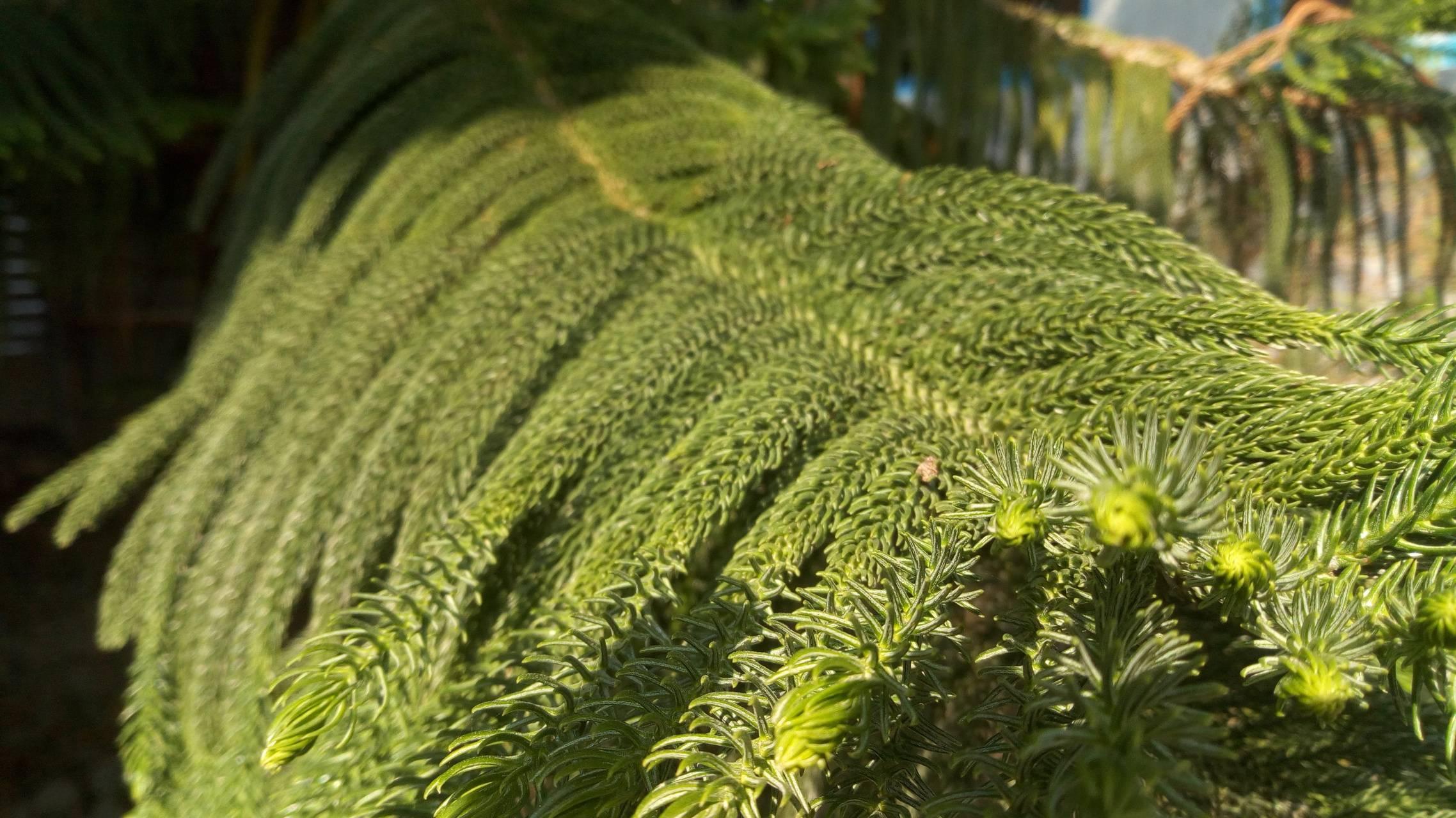 Xmas tree leaves