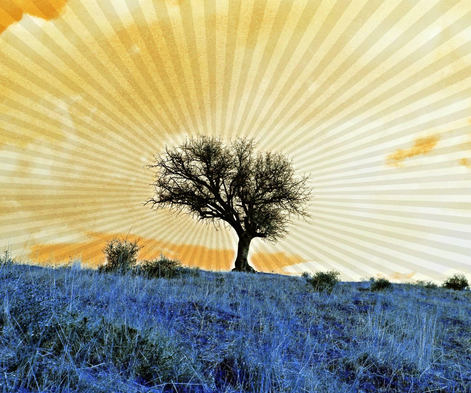 Dream Nature