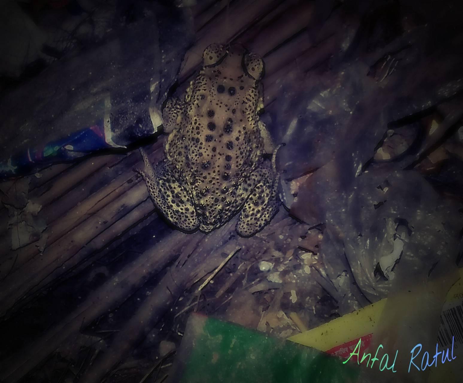 Frog splash