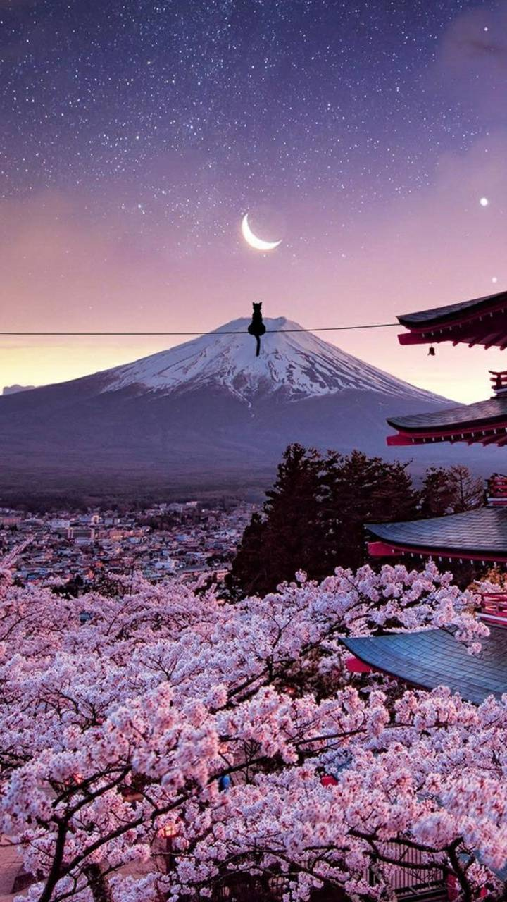 Japanese Night