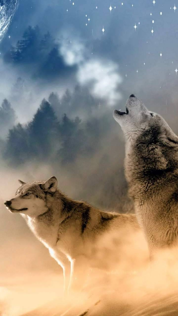 The Two Wolves Wallpaper By Jegeccskeee 23 Free On Zedge