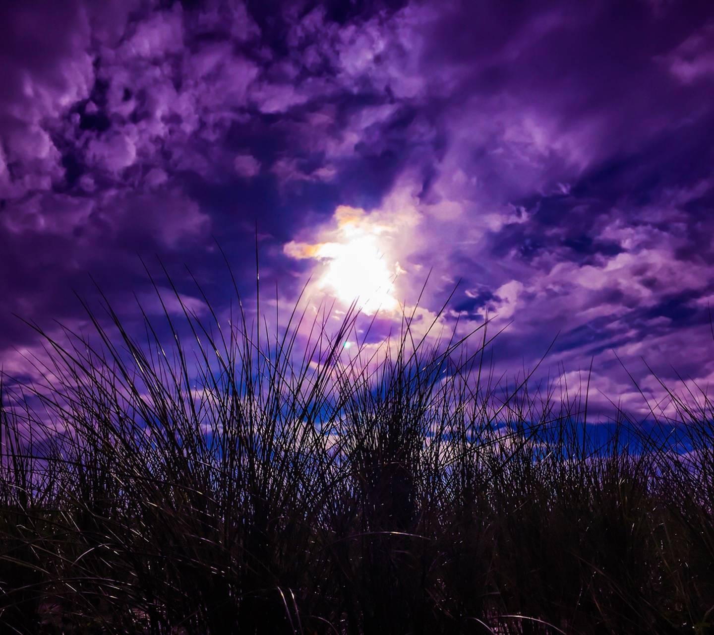 Purple Lanscape