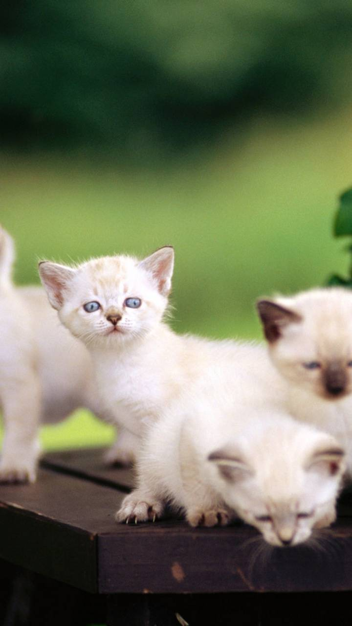 cute Cats in group