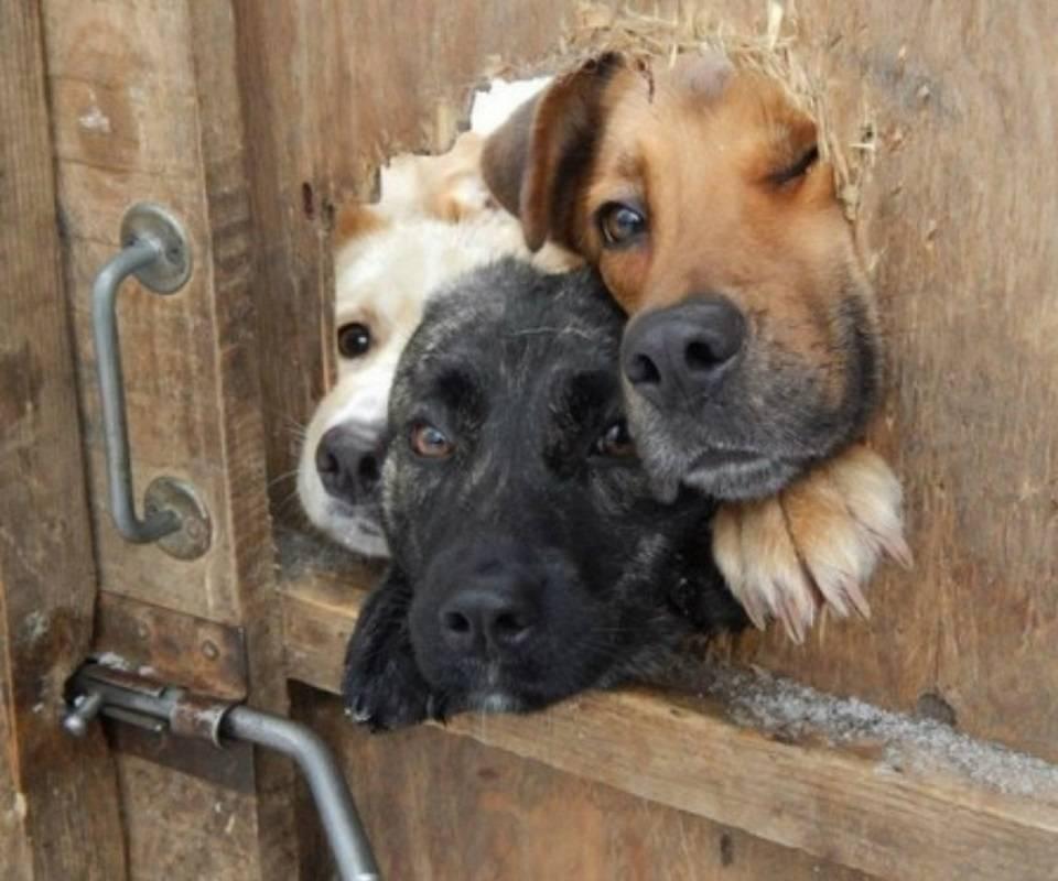 Peeping puppies