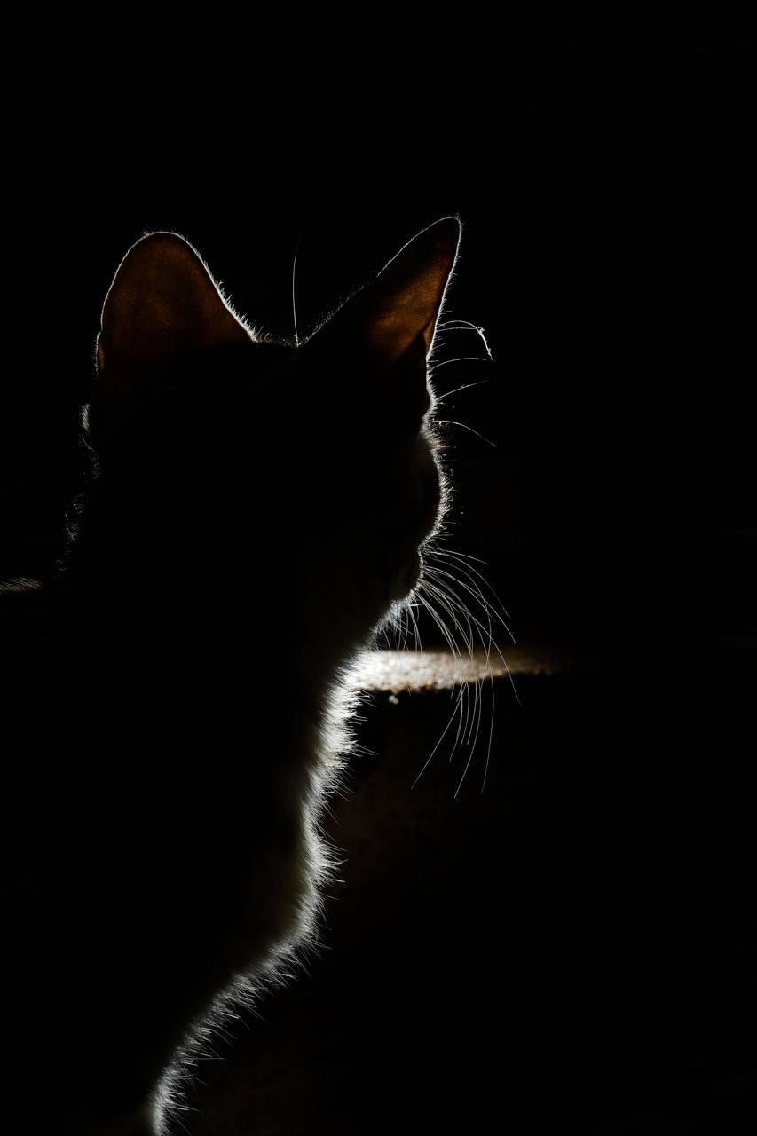 Soul of cat