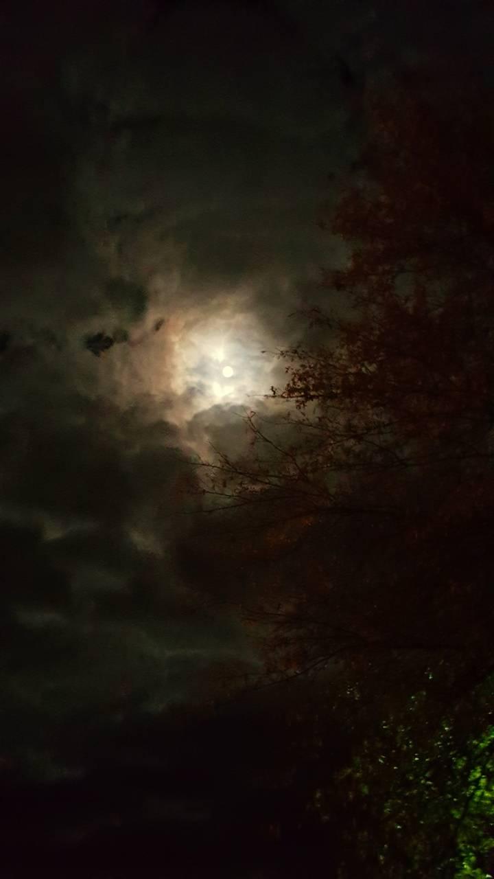 Fantasy Night