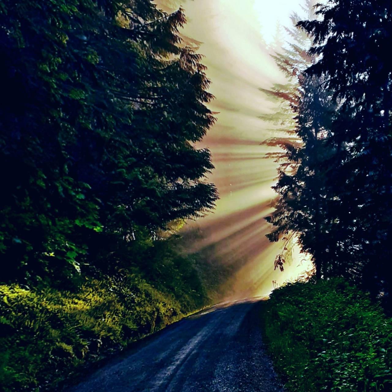 Sunbeam Dream