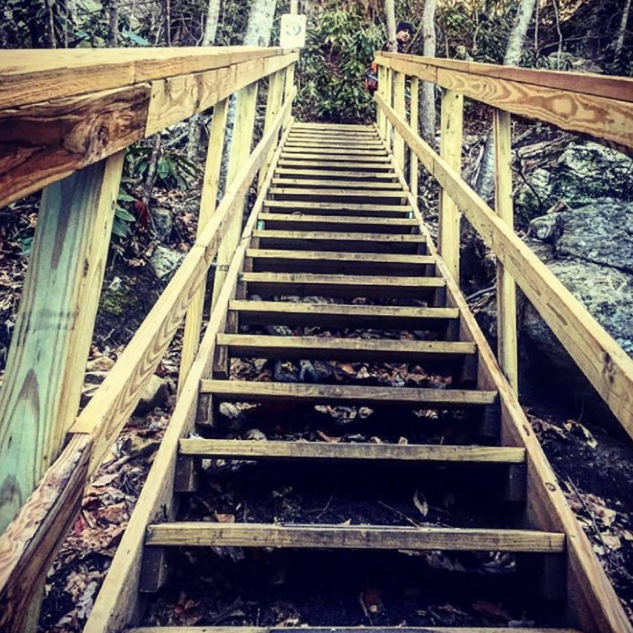 Stairs to nature