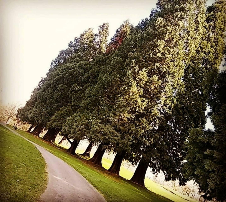 Vanport Trees