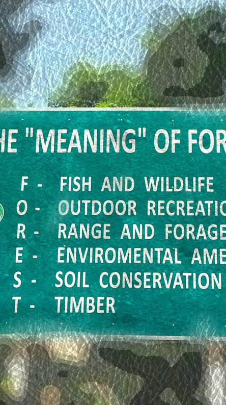 Meaning of forest