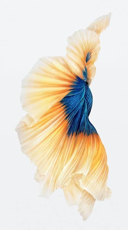 iPhone 6s fish