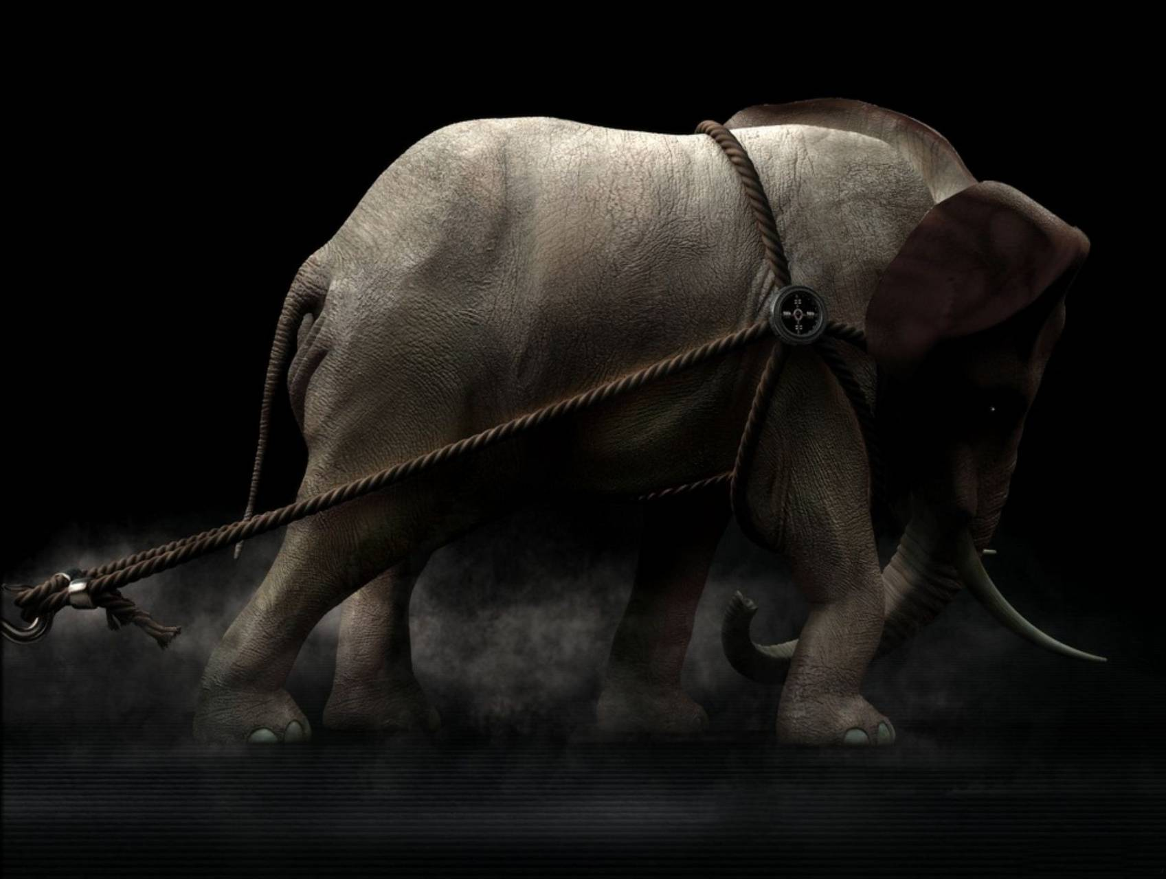 Strong Elephant