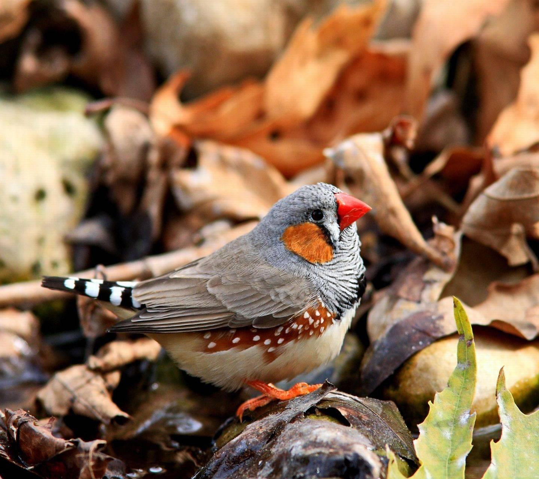 bird autumn