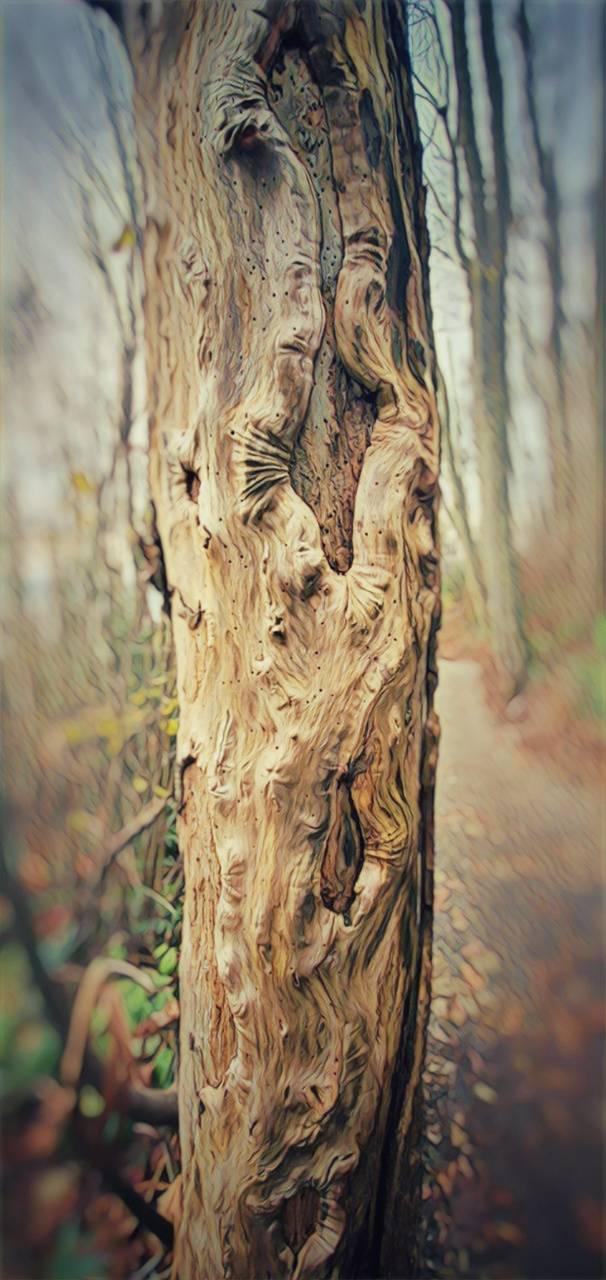 Psychadelic Tree