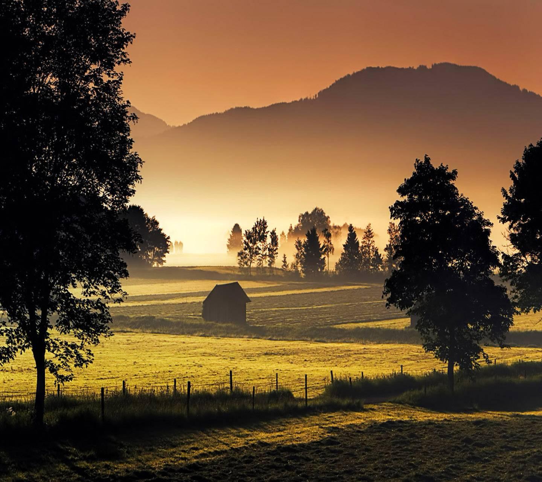 Mist Nature