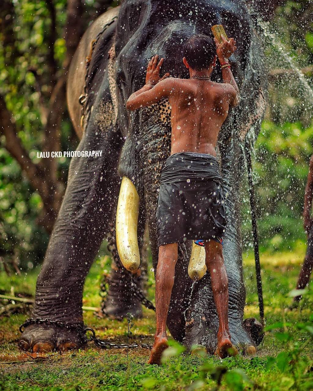 Elephant Kerala wallpaper by Gurusad - 6f - Free on ZEDGE™
