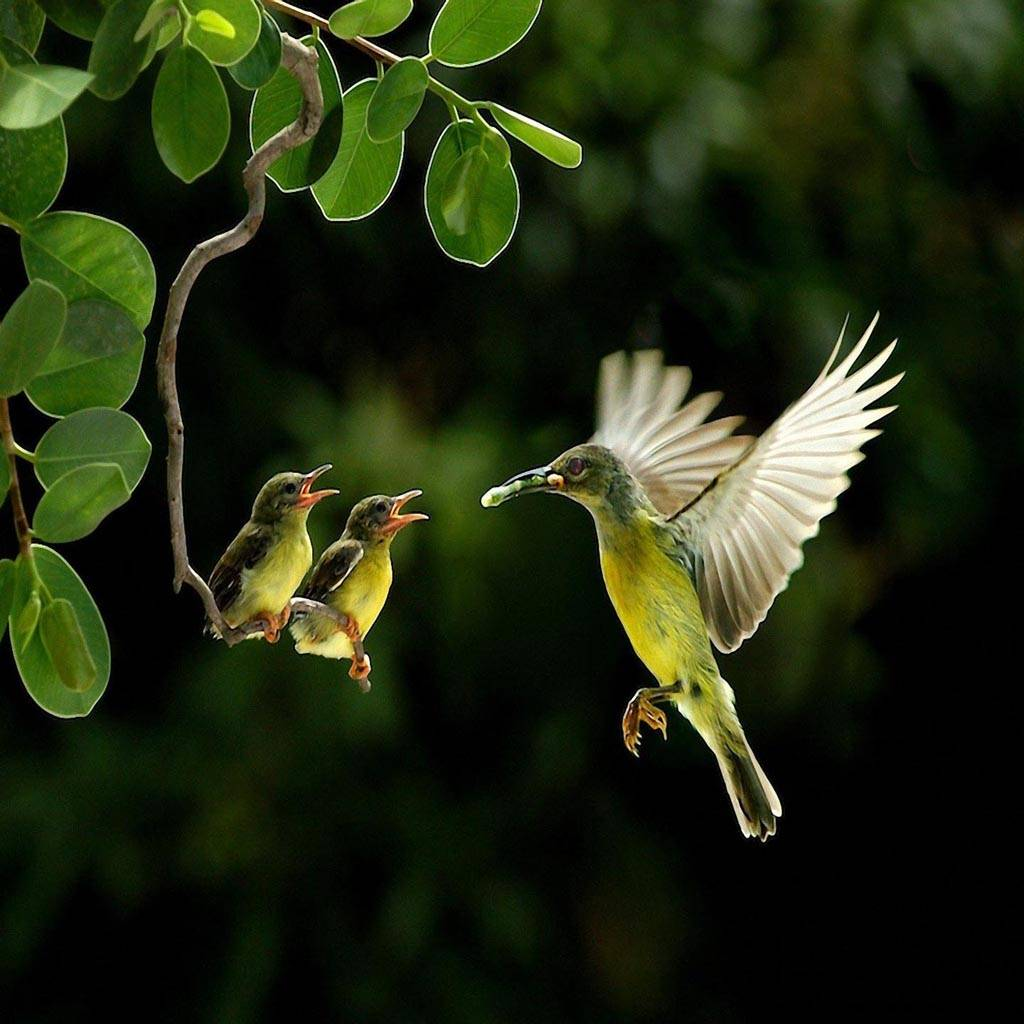 Birds Wildlife