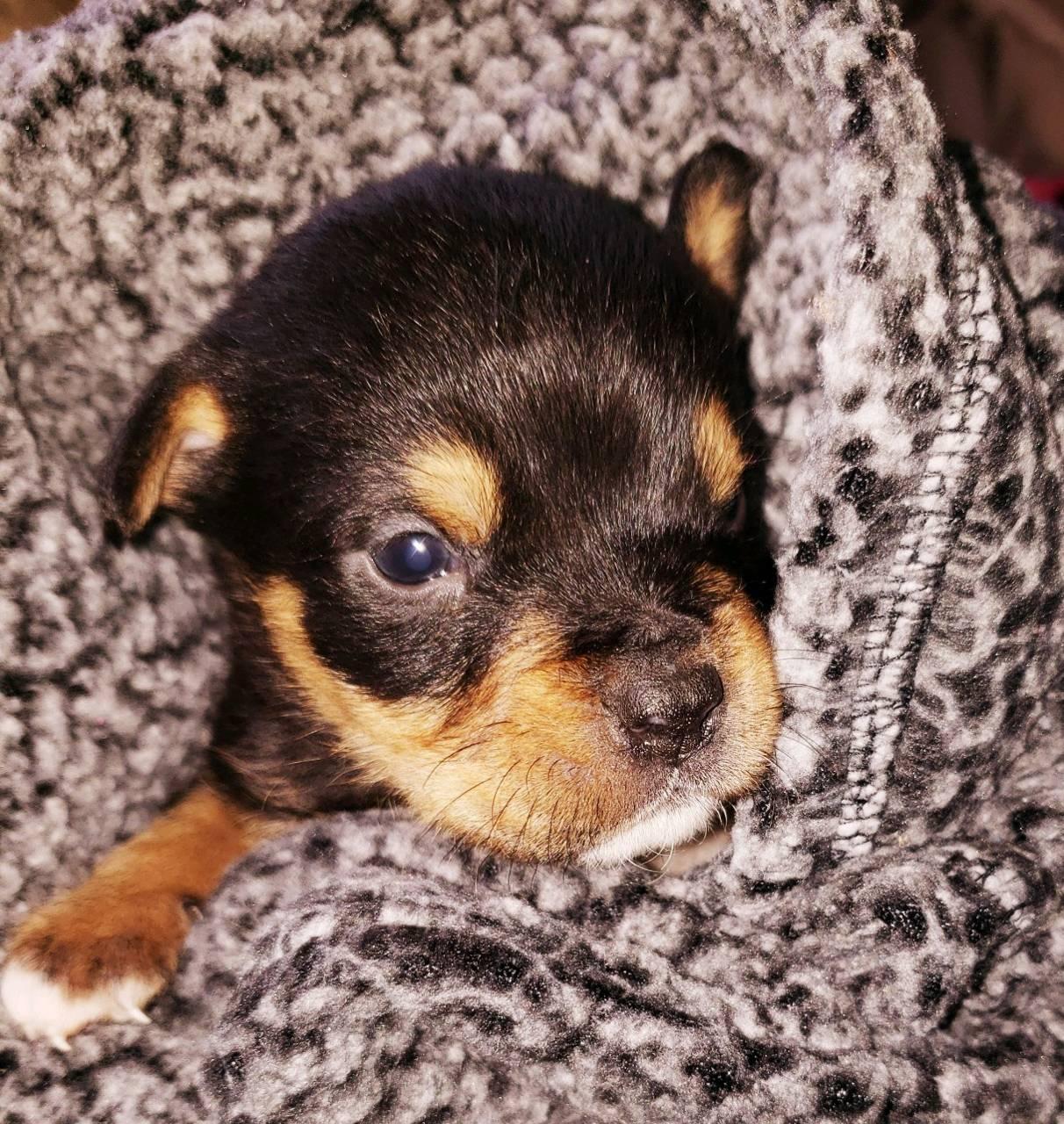 Pretty Lill pup