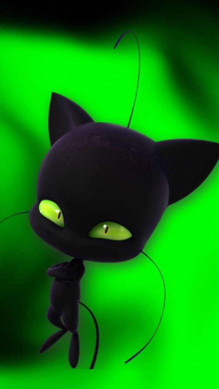 plaga chatnoir