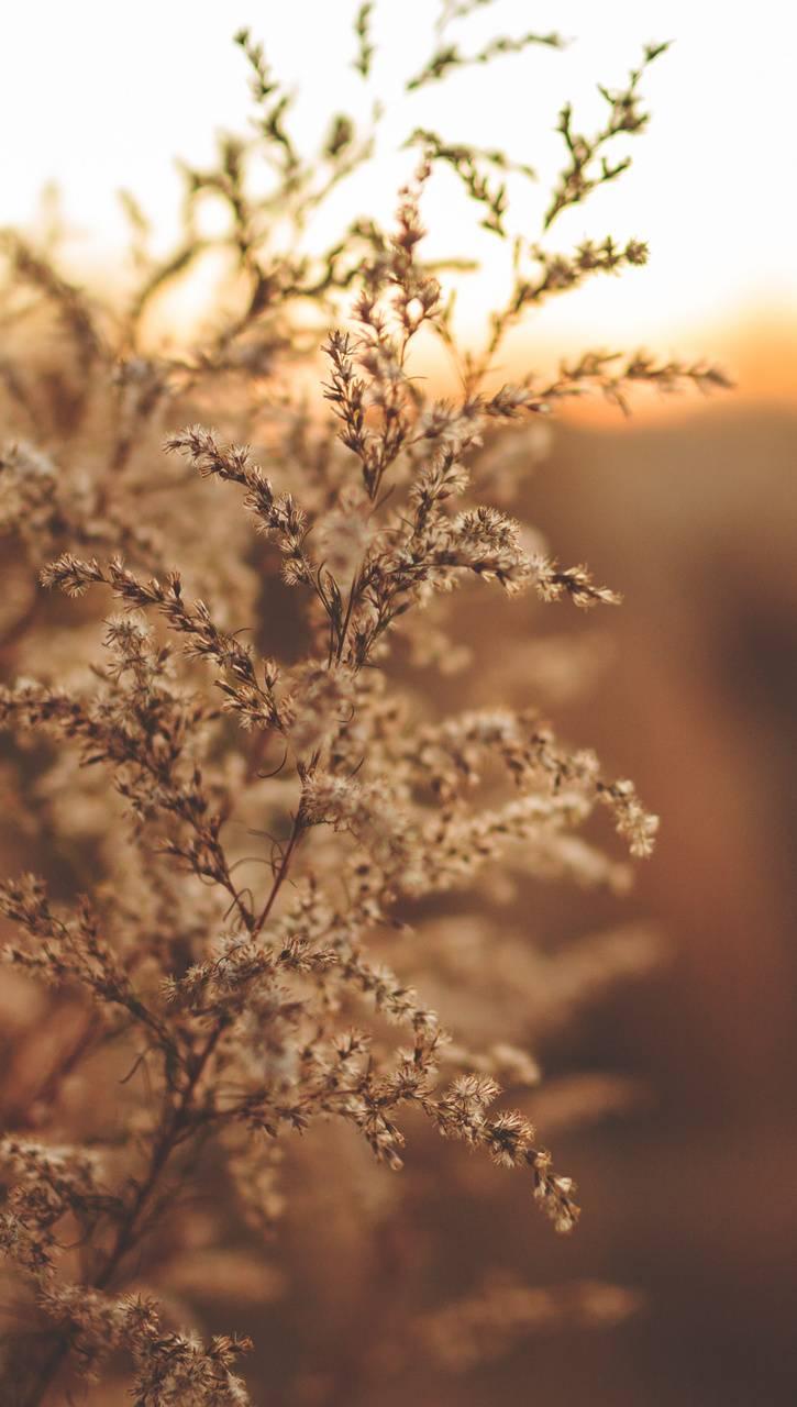 grass light nature