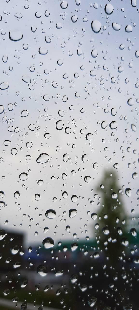 Rain spring