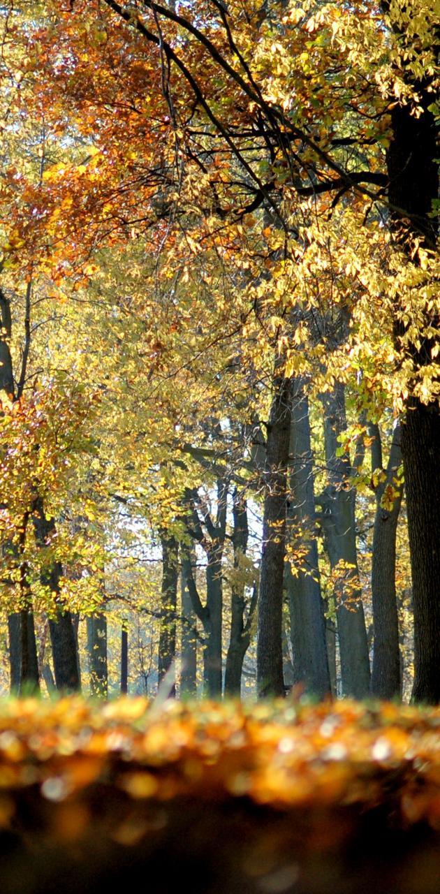 Fall follows