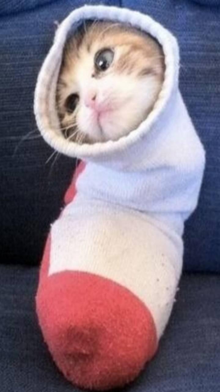 Gato en un calcetin