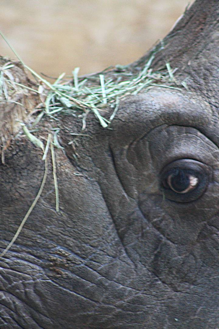 Глаза носорога картинки