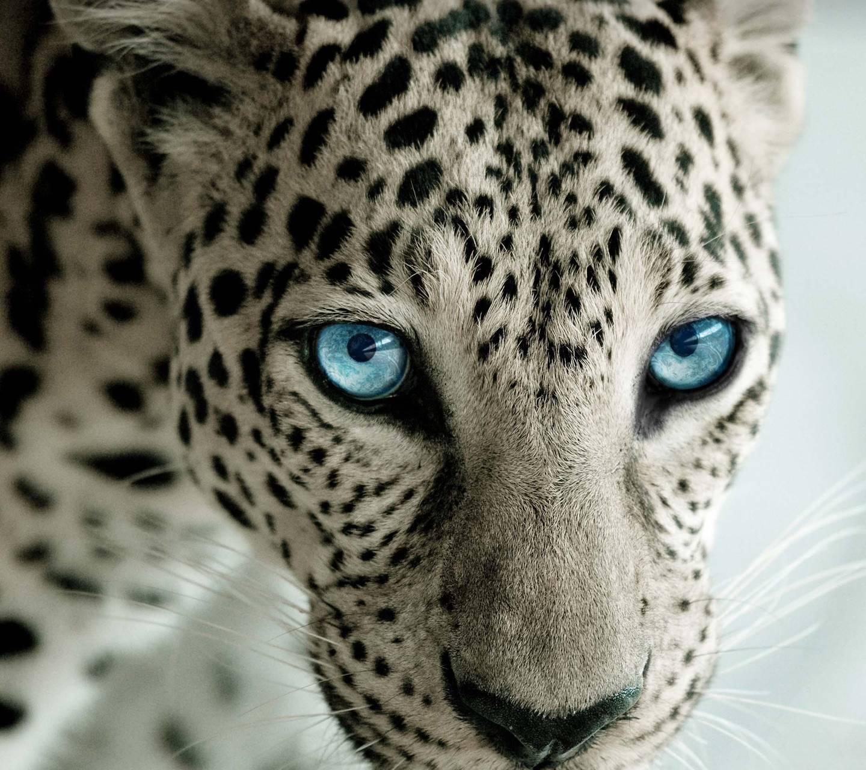 Blue eyes HD