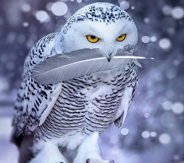Owl an feather