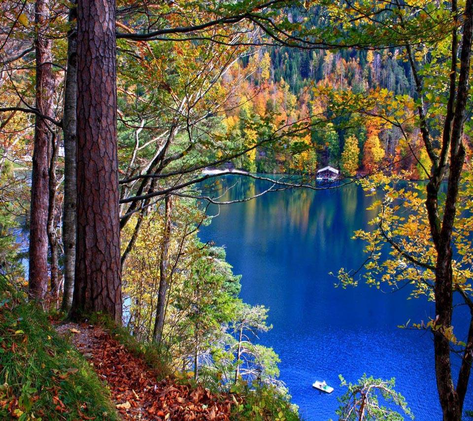 Lakes Trees