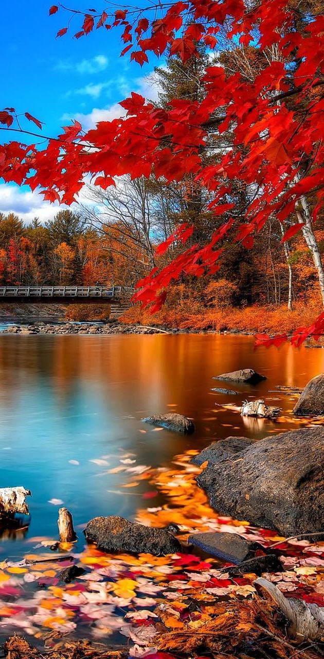 Beautifil Nature