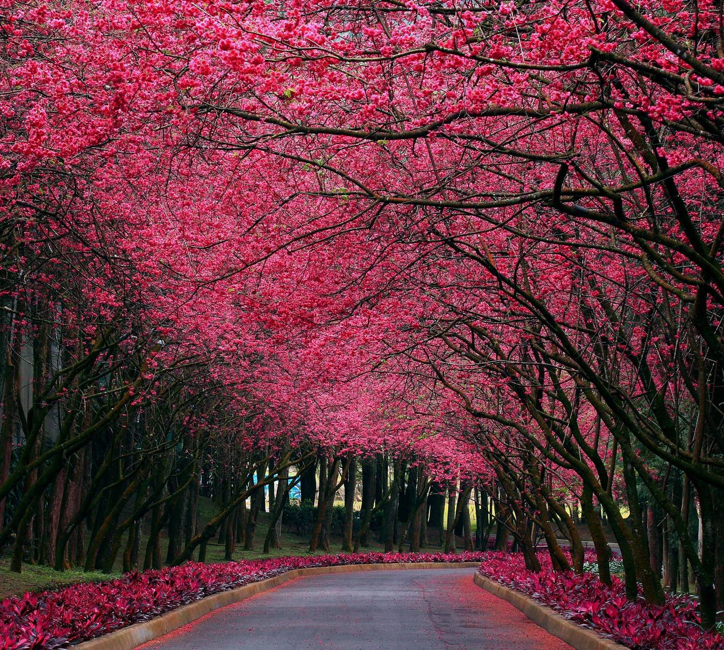 Lovely Nature
