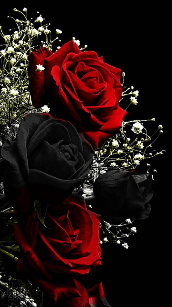 Red Black Roses