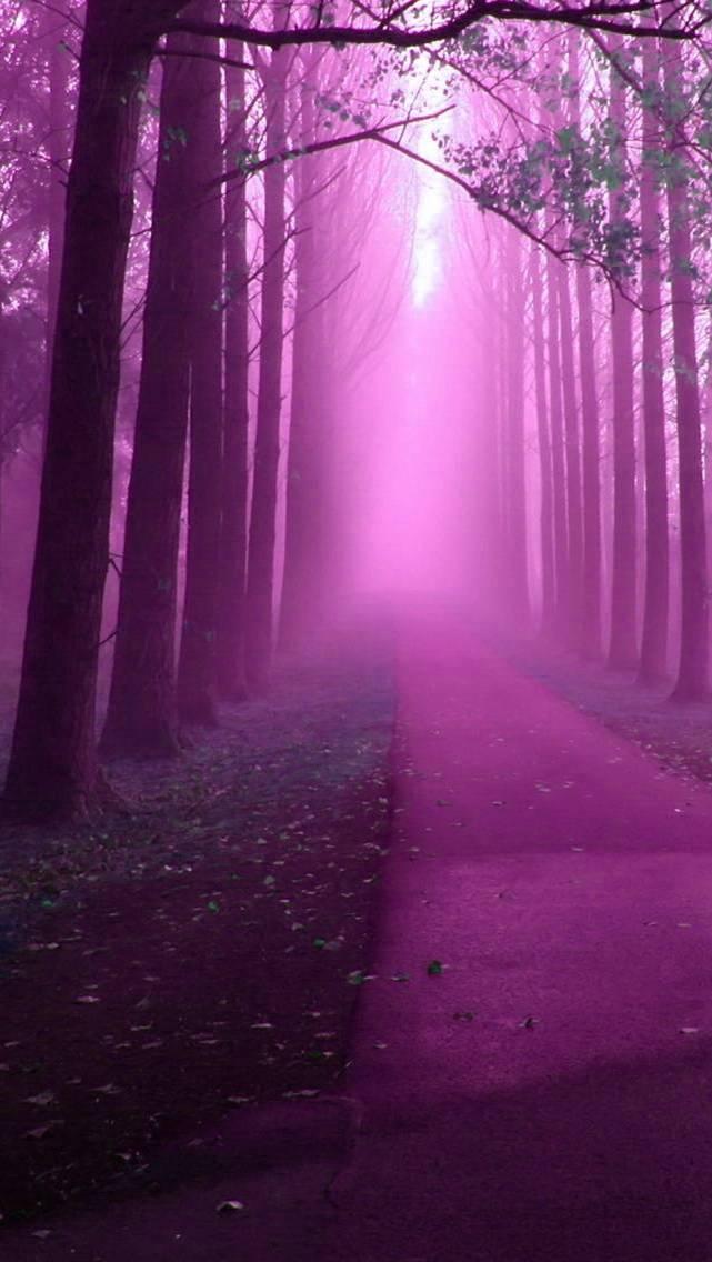 purple misty forest