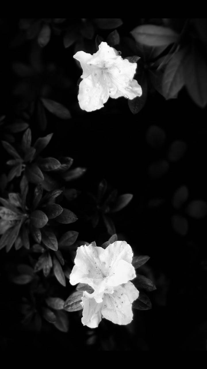 black n white bloom