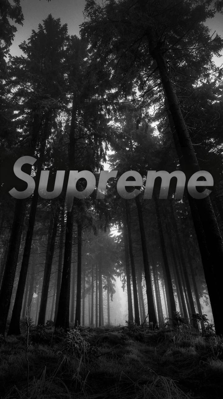 Dark Forest Supreme