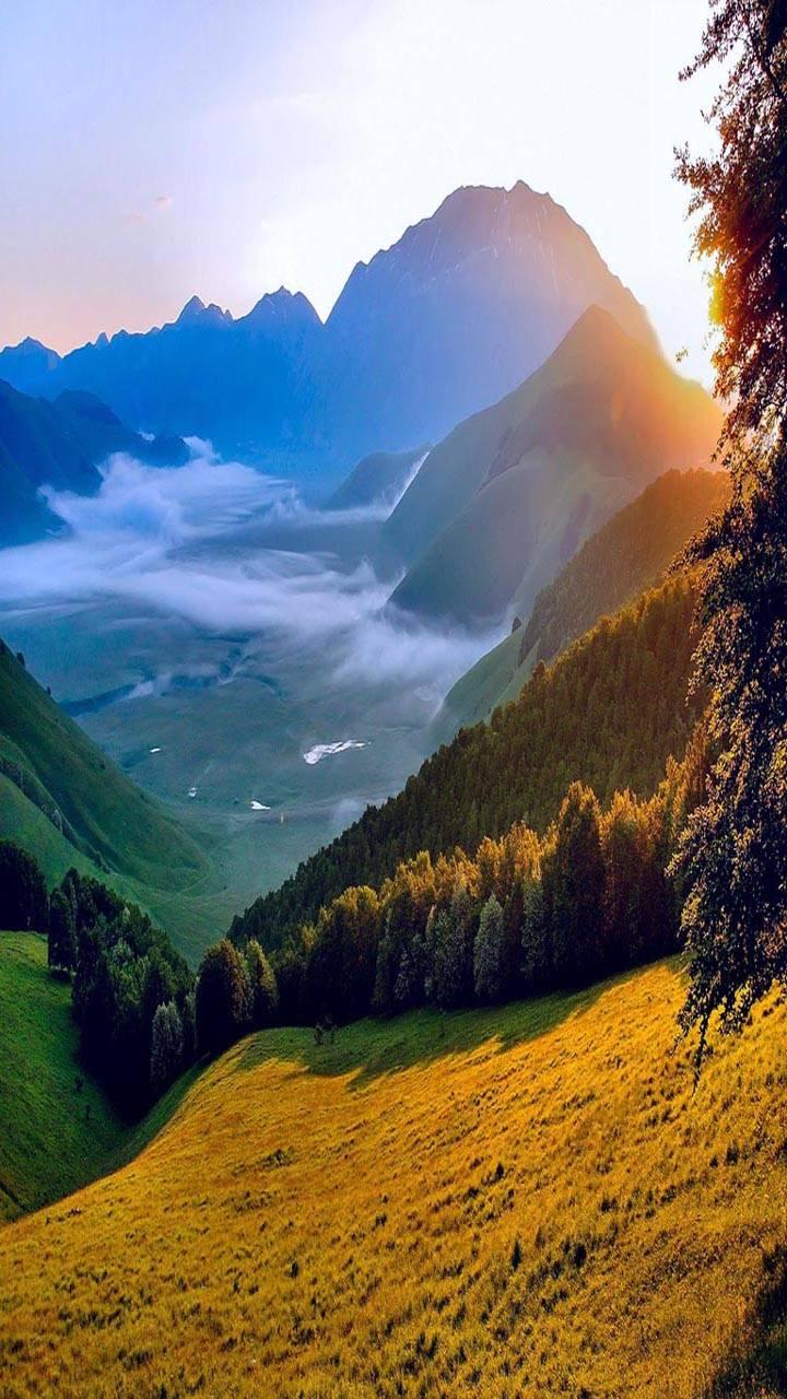 Morning Sun Nature