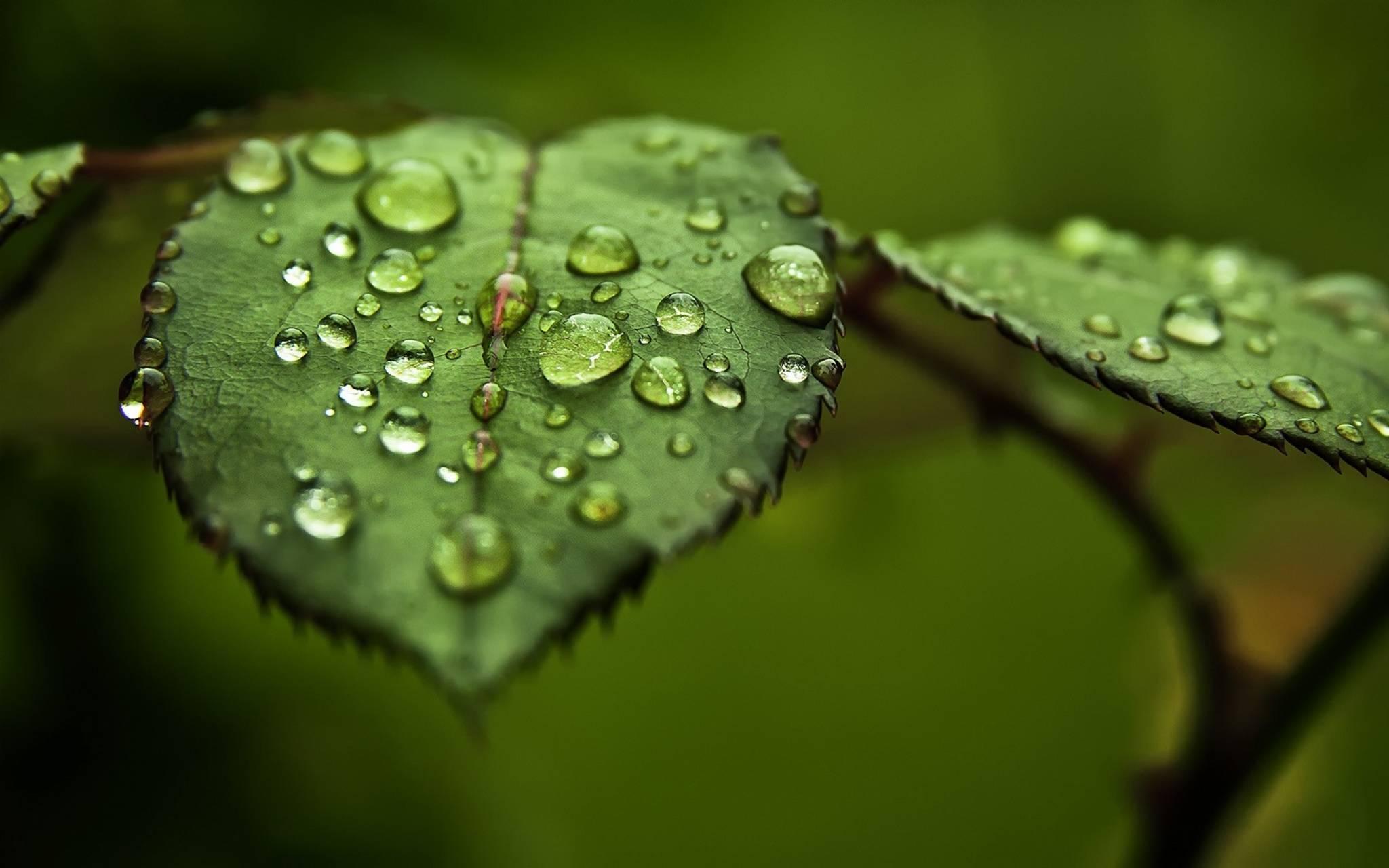 Green Water Leaves