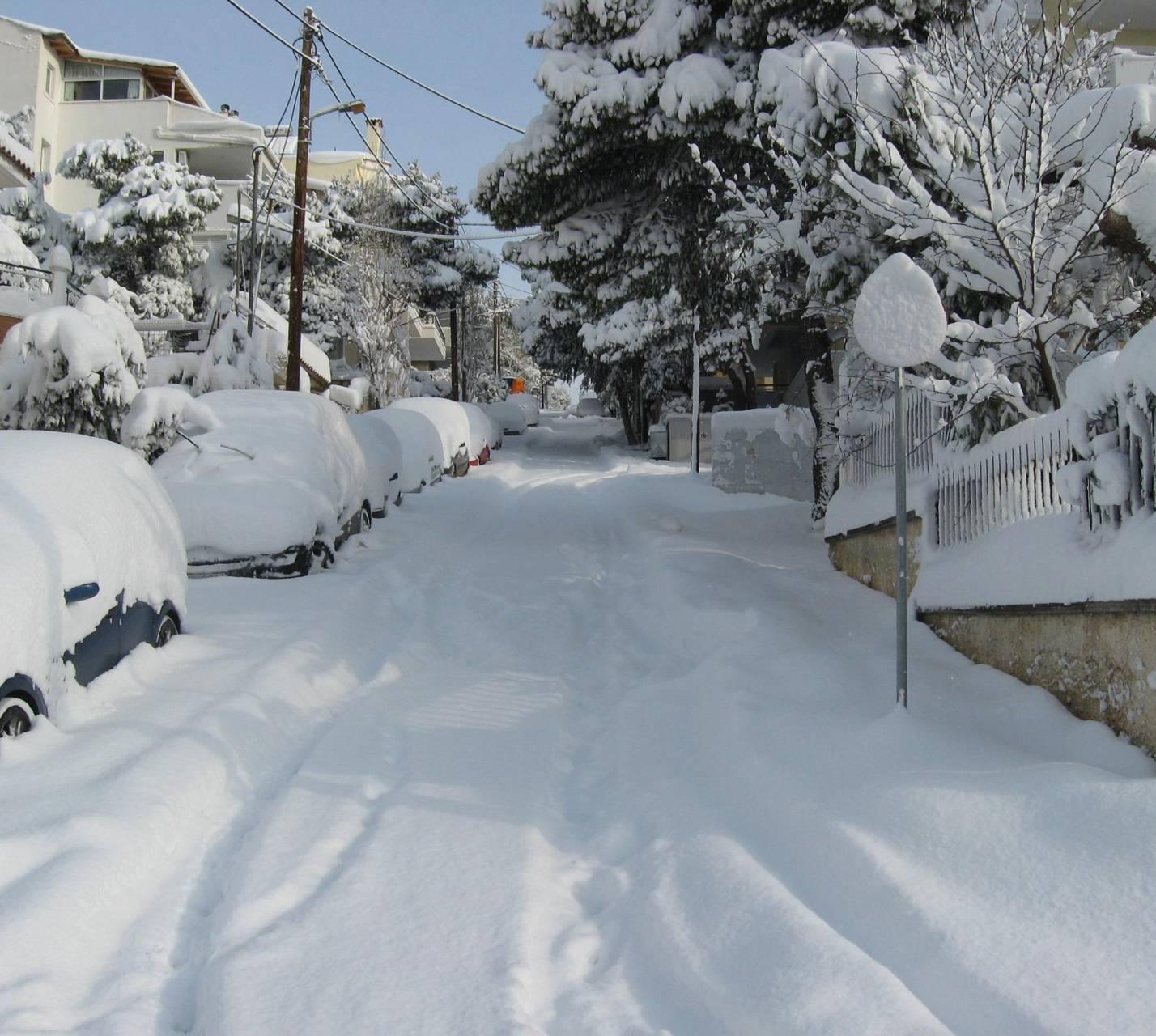 Snow Melissia