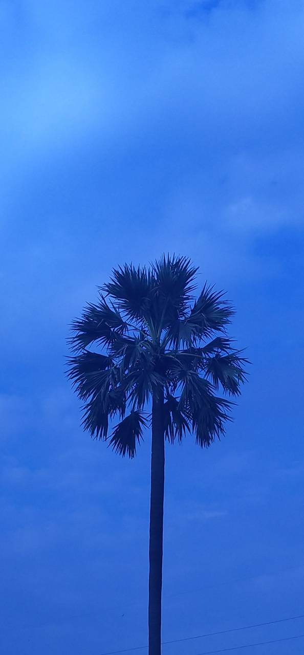 Tree leafs sky