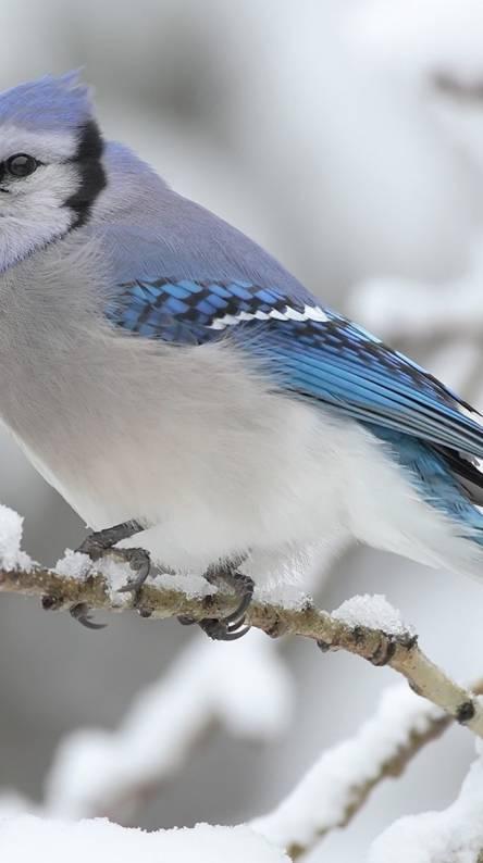 bird sound ringtone zedge