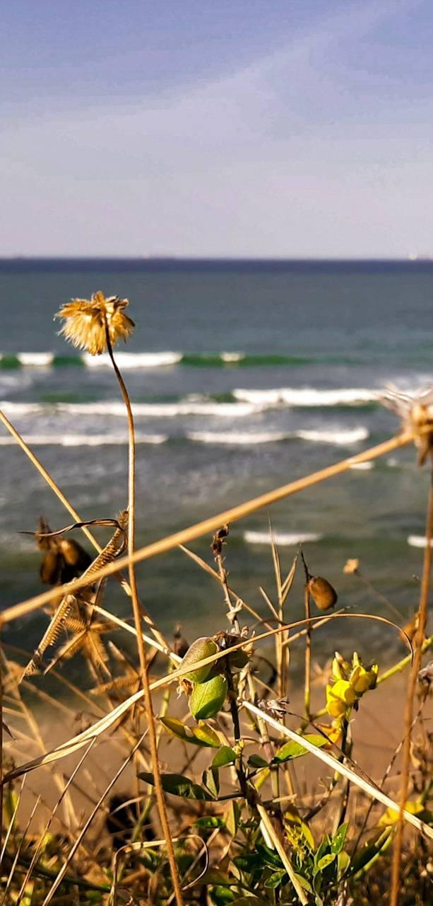Sea cliff nature