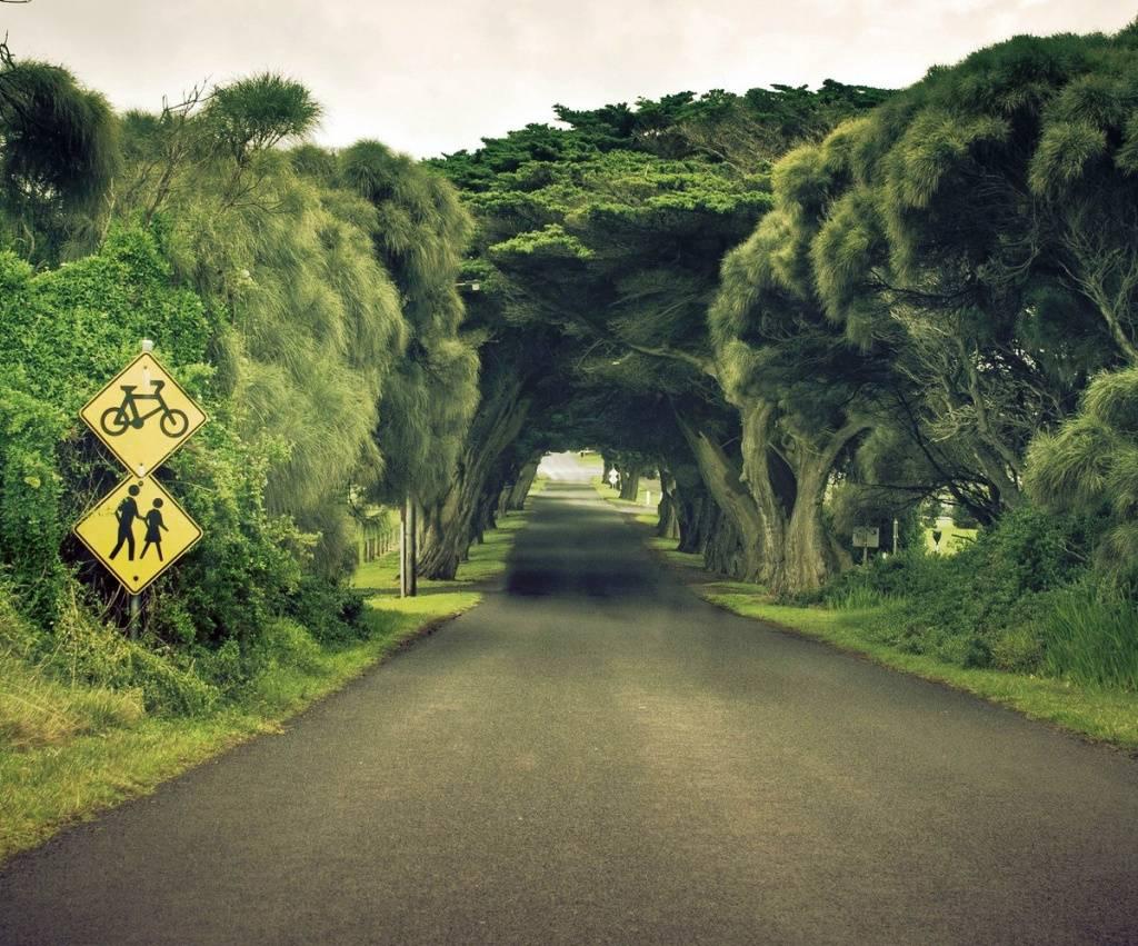 Tree Tunnel Hd