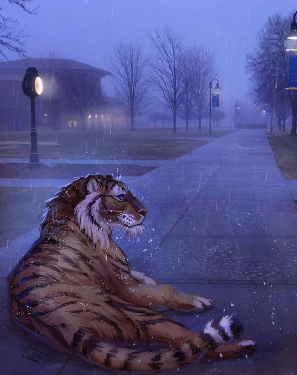 Rainy Tiger Street